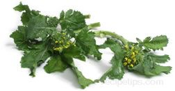 broccoli raab Glossary Term