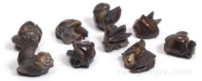 Snail Glossary Term