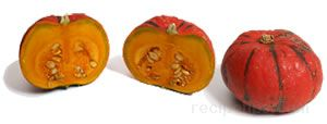 Red Etampes Squash Glossary Term