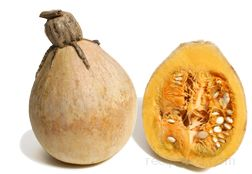 tennessee sweet potato squash Glossary Term
