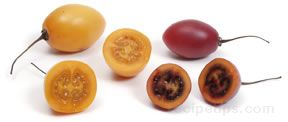 tree tomato Glossary Term