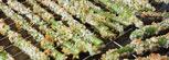Crispy Oven Fried Asparagus Recipe