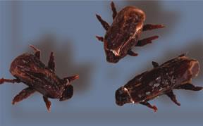 Edible Halloween Props - Roaches
