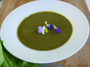 Cream of Sorrel Soup Recipe