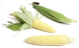 all about sweet corn Article