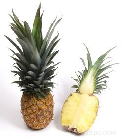 all about pineapple Article
