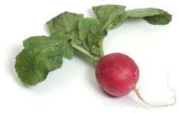 All About Radishes