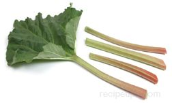Rhubarb Article