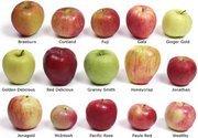 Choosing the Best Apples