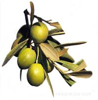 Olive Oils Article